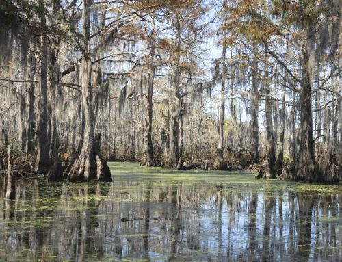 Mysteries of Louisiana Swamplands